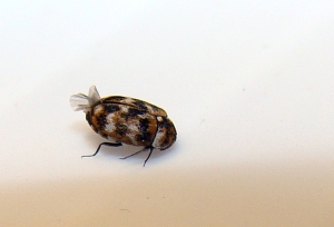 Mystery insect