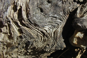Contours of weathered root.