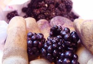 Gloved hand holds blackberries