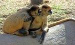 Two primates share a secret.