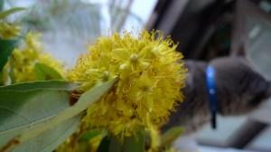 ruang phung flowers