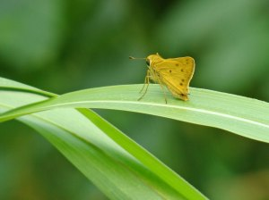 Yellow butterfly on  leaf