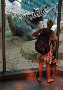 Zoo patrons viewing gorillas