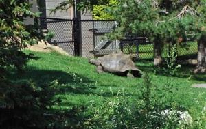 Tortoise slogs uphill
