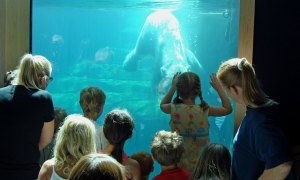 Zoo visitors see polar bear swimming