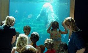 Zoo visitors see polar bear swimming