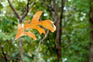 Falling leaf suspended.