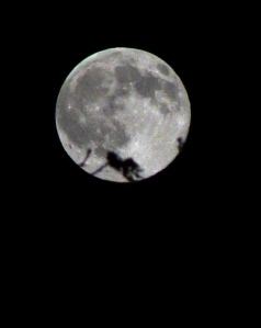 Full moon puts leaves in silhouette.