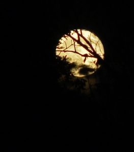 Another moon picture
