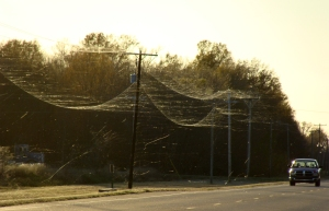 Webs waft in Brinkley