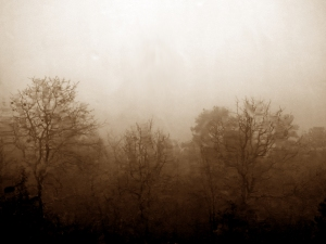 sepia style image of a foggy day in the Ouachita Mountains