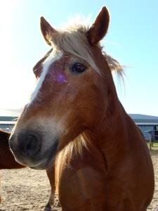 Horse in pen