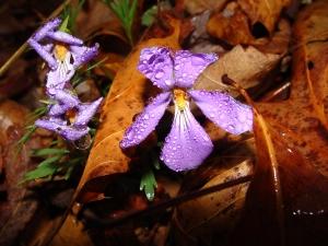 Three violets.