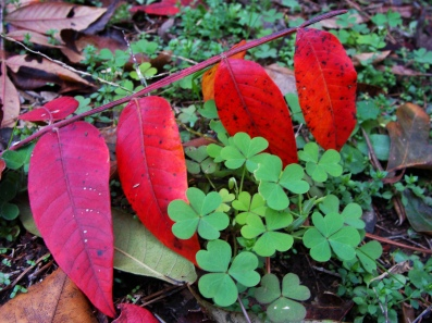 SUMAC AND SORREL -- Nicely contrasting pair.