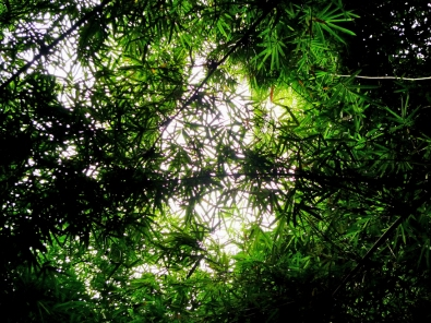 BAMBOO SKY -- What panda heaven must look like.