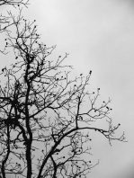 Stranded hickory nuts in silhouette.