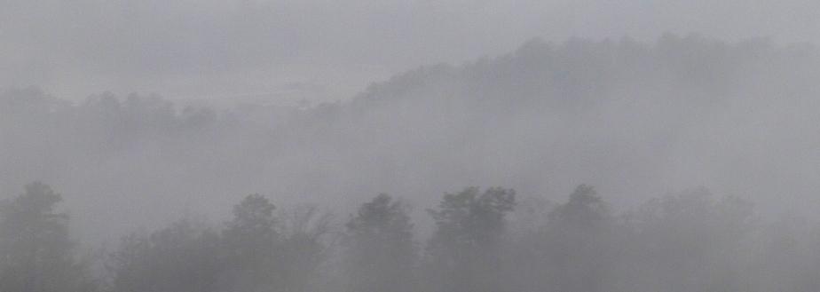 1-13-Morning-Mist-Pines