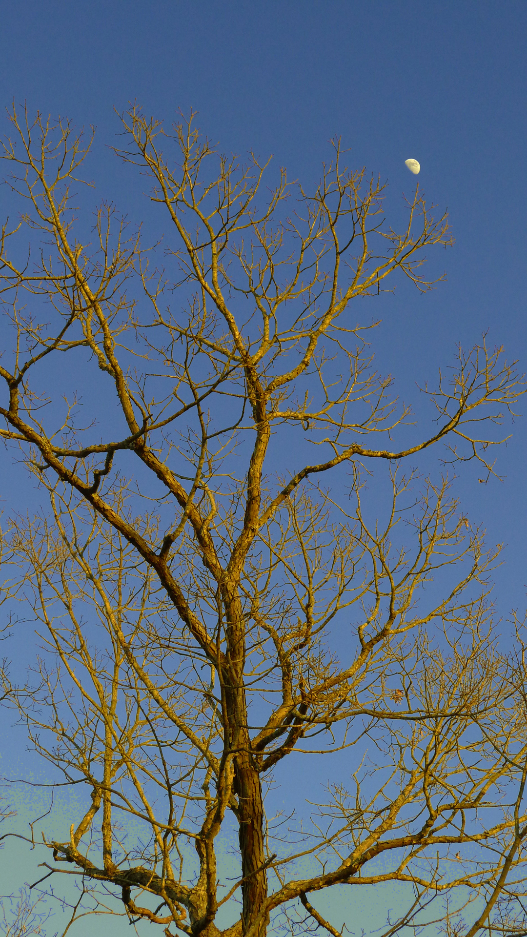 1-20-Golden-Tree4-web