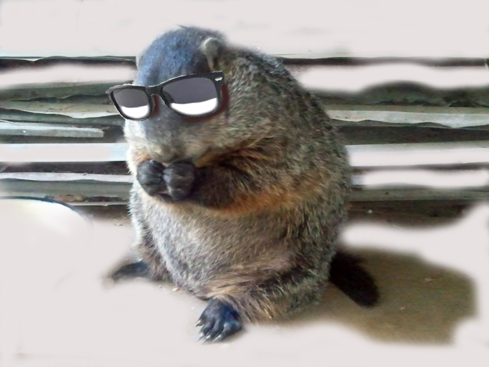 COOL LAND BEAVER -- Pennsylvania has its weather predictor. Perry County, Ark., has one too.