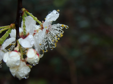 Tight shot of droplets on flowers.