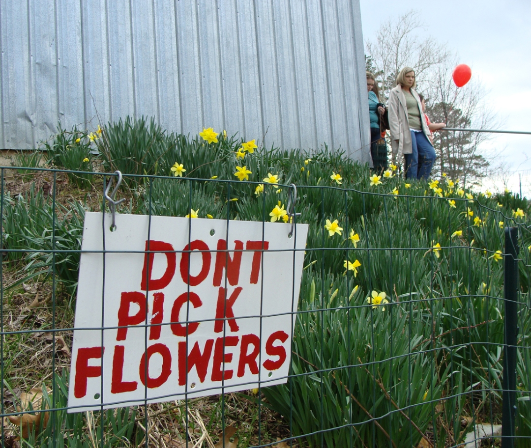 NEED TO KNOW -- Important instruction to heed when at a flower festival!