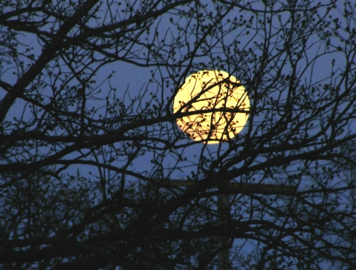 March full moon rising through trees in the Hillcrest section of Little Rock.