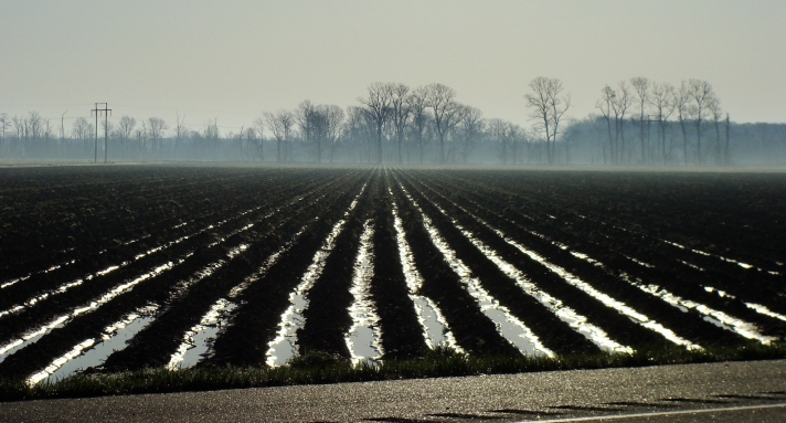 Water filled rows in the Delta.