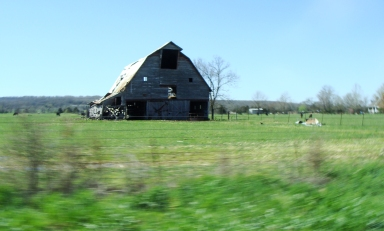 Big barn watches traffic on the Pig Trail.