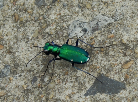 Iridescent green armor stands out on the concrete.