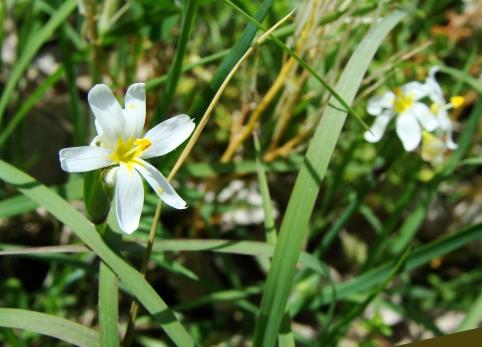 Unknown white flower