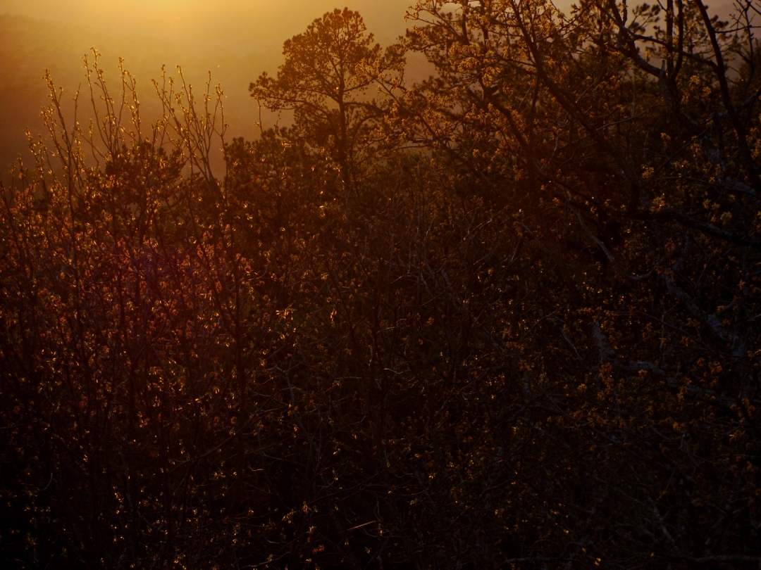 4-5-Sunset-Springtime