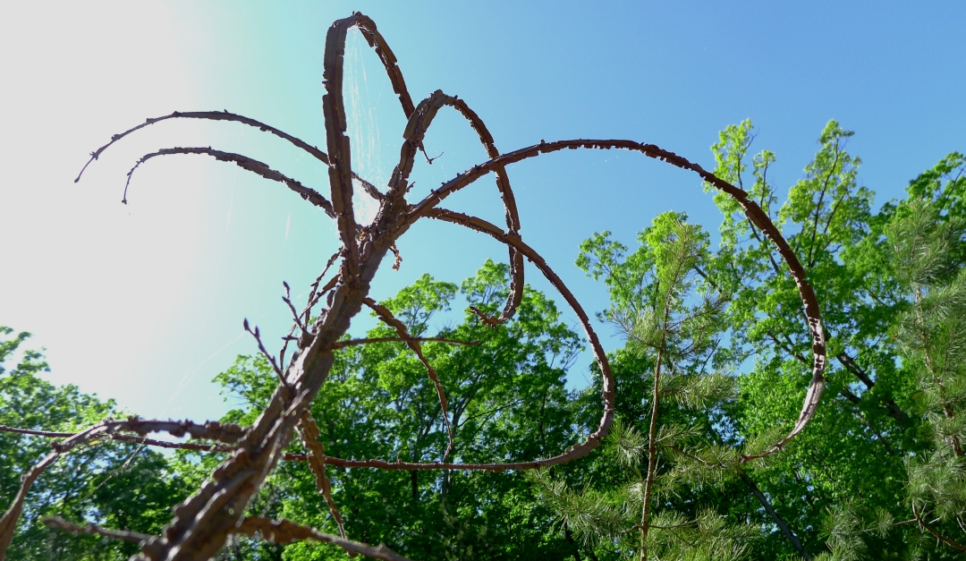Shrub with curlicue branches.