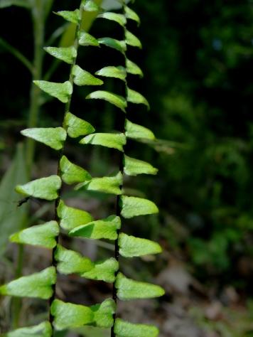green fern fronds.
