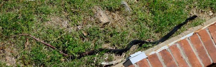 Snake in the grass,