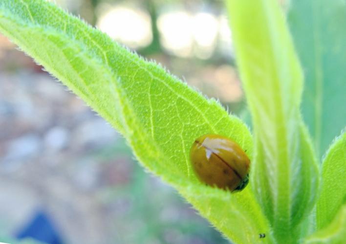 Ladybug sleeping on a leaf.