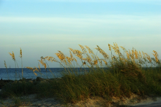 Golden hour sun hits sea oats on the east side of Dauphin Island.