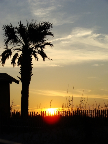 Sunset with palm tree silhouette.
