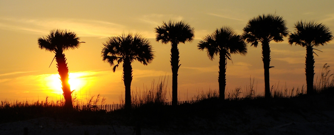 Silhouetted palms in the sunset