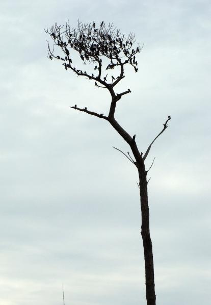 Tree full of birds.