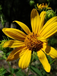 yellow flower.