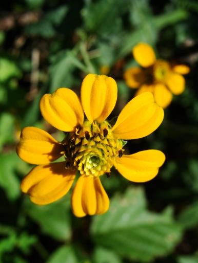 8-24-Gold-flower