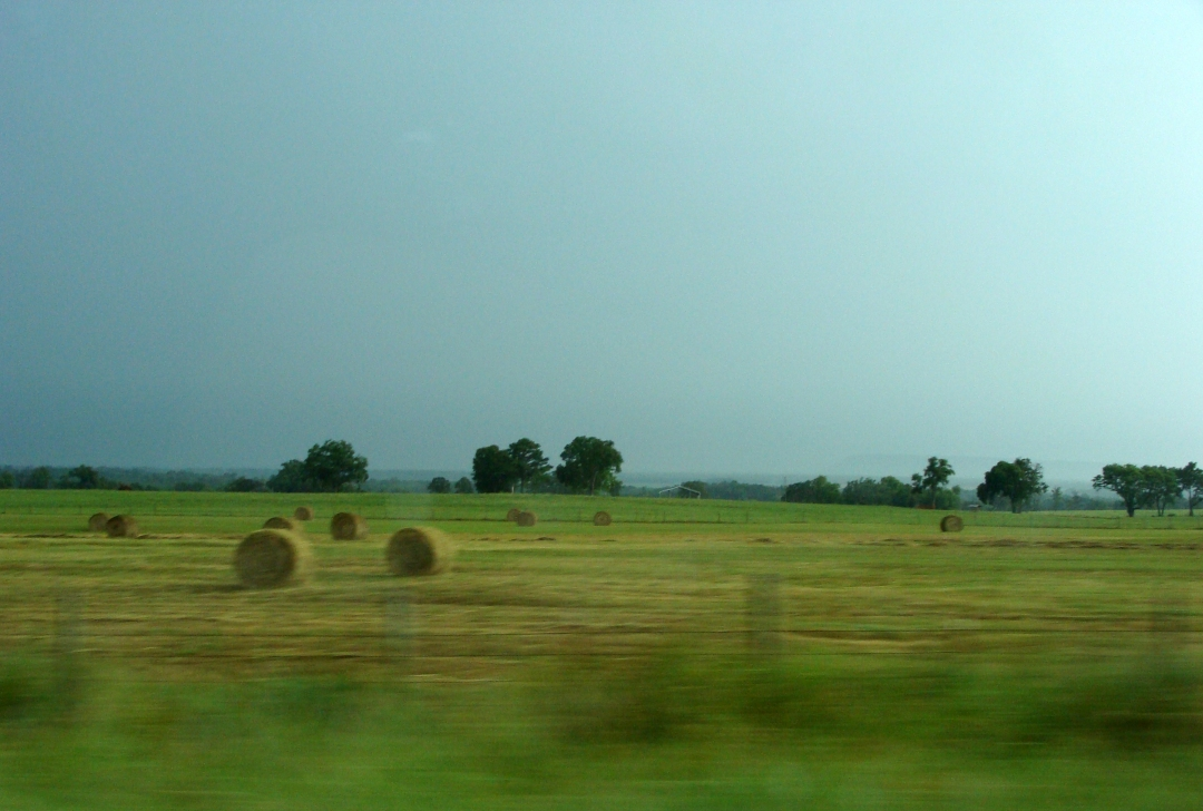 Round hay bales in a pasture