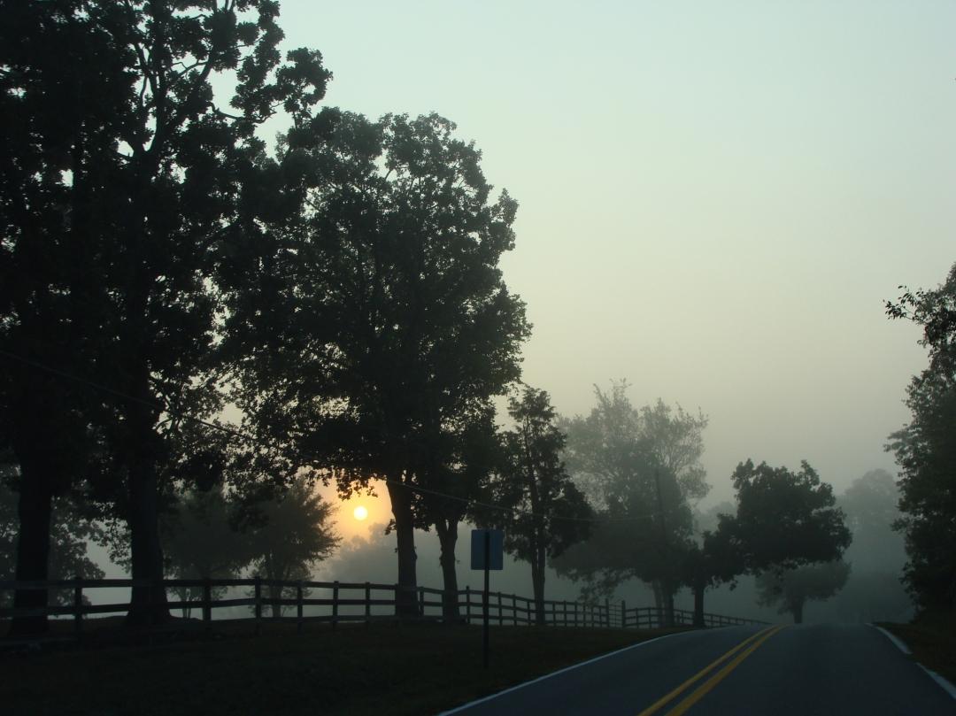 Mist-softened sunrise, silhouetted trees.