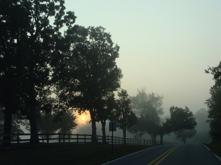 Mist-softened sunrise, silhouetted trees.