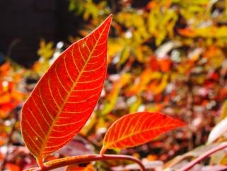 Sumac leaves.
