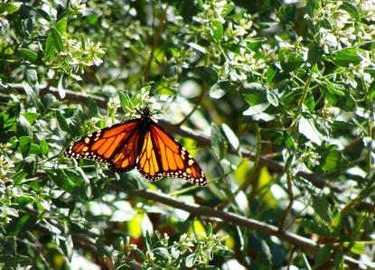 10-20 Monarch1