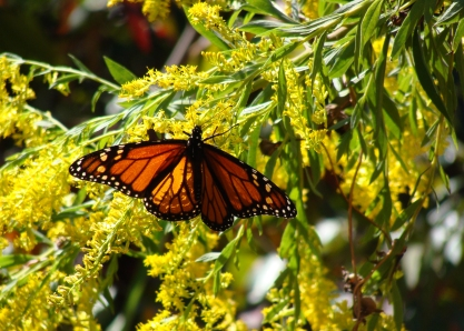 10-20 Monarch2