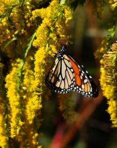 10-20 Monarch3