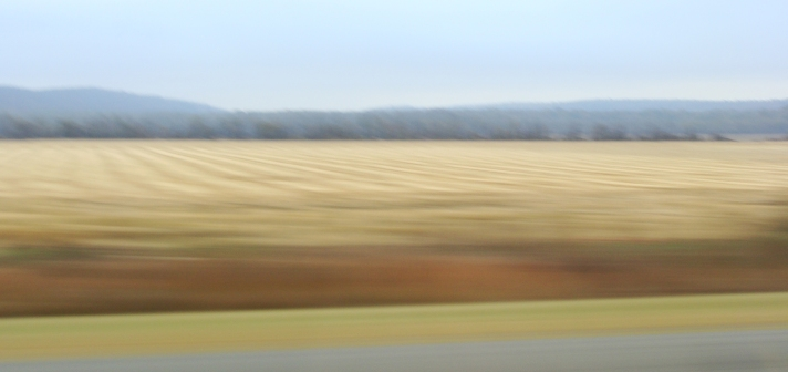 blurred rice field