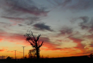 TREE -- Tree silhouetted against fiery sunset.